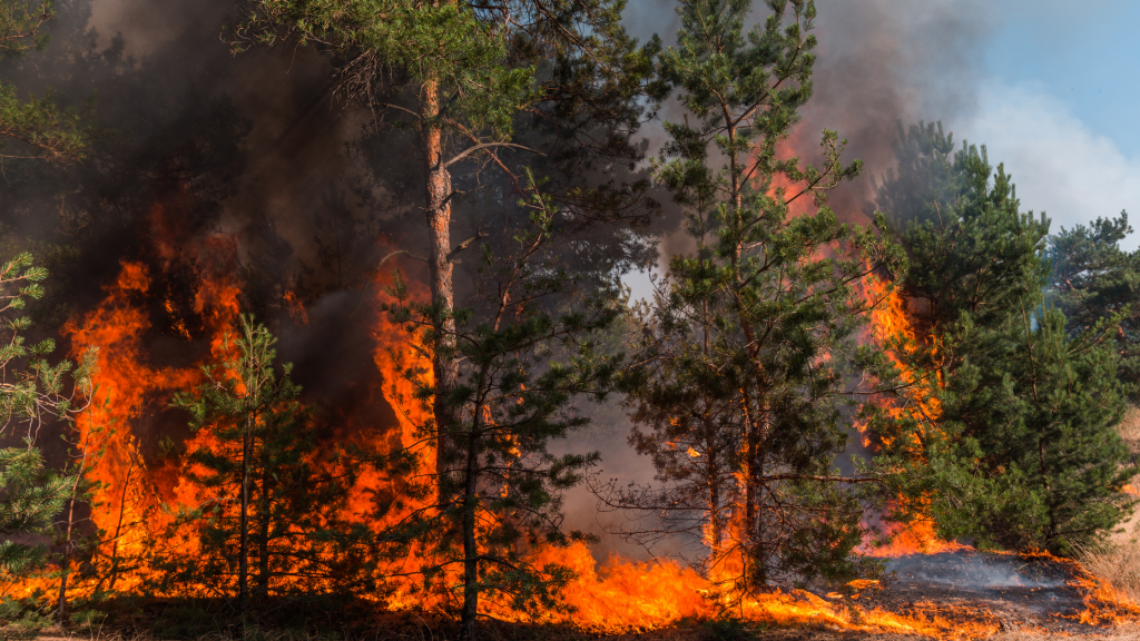 forest fire, global warming